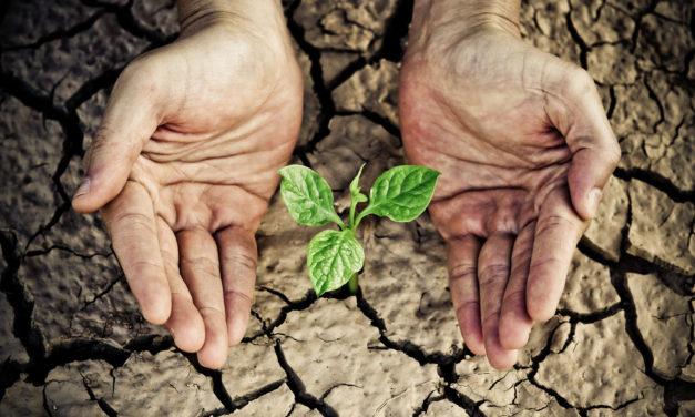 Sem crise: 6 negócios que crescem em períodos difíceis